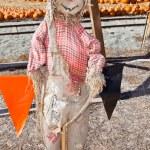Scarecrow — Stock Photo #8451325