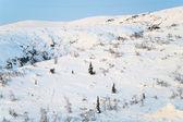 Kış mevsiminde dağ vahşi yamaç — Stok fotoğraf