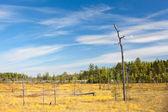 One lonely dry stem of tree on Karelian marsh in summer season — Stock Photo