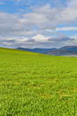 Spring Fields — Stock Photo
