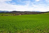 Spring Fields — ストック写真