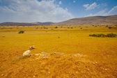 Hills of Samaria — Stock Photo