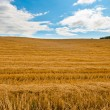 Mown Hay — Stock Photo #9219218
