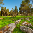 Clearing in Israel - Stockfoto