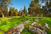 Clearing in Israel — Stockfoto