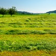 Mown Fields — Stock Photo