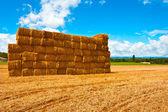 Dry Hay — Stock Photo