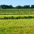 Mown Hay — Stock Photo #9854692