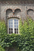 Window with ivy — Stock Photo