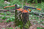 Several hatchets sticked in a tree stump — Stock Photo