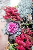 Planten in de pot — Stockfoto