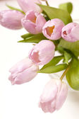 Pink tulips in the vase — Stock Photo