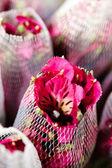Freesia flowers — Stock Photo