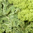 Stock Photo: Fresh kale
