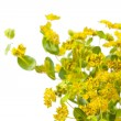 Yellow flowers — Stock Photo #8697642