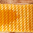 Fresh honey in comb — Stock Photo