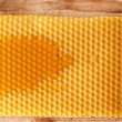Fresh honey in comb — 图库照片 #8697853