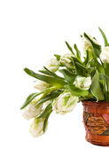 White tulips — Stockfoto