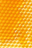 Dulce miel en panal — Foto de Stock