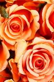 Belles roses — Photo