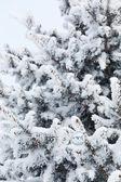Parc d'hiver dans la neige — Photo