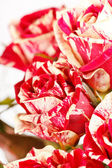 Lindas rosas — Foto Stock
