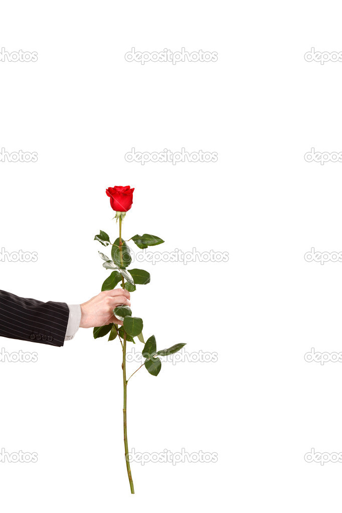 Red rose in the hand — Stock Photo #8690781