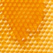Fresh honey in comb — Stockfoto #8722623