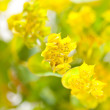 Yellow flowers — Stock Photo #8723739
