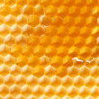 Fresh honey in comb — 图库照片