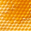Fresh honey in comb — Stockfoto #8726759