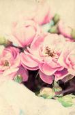 Flores agradables — Foto de Stock