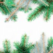Stock Photo: Fir tree branches