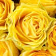 Yellow roses in full frame — Stock Photo #8780645