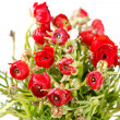 Red Ranunculus — Stock Photo #8788344