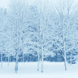 Winter park in snow — Stock Photo #8789158