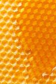 Miele fresco nel pettine — Foto Stock
