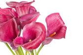 Belles fleurs — Photo