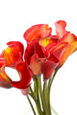 Bellissimi fiori — Foto Stock