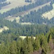 Carpathian Mountains - Stock Photo