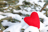 Heart on the branch of fir — Stock Photo
