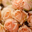 Beautiful roses - Stock Photo