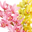 Stock Photo: Orchid isolated on white background