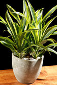 Green plant in the pot — Stock Photo