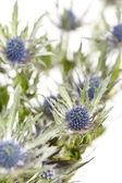 エキゾチックなシャープな花 — ストック写真