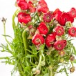 Red Ranunculus — Stock Photo #9300078