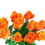 Golden roses — Stock Photo