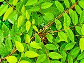 Wet plant — Stock Photo