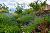 Mediterranean garden — Stock Photo