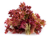 Red leaf lettuce — Stock Photo